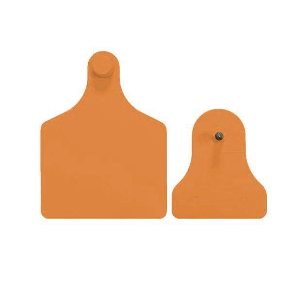 f4m2-orange.jpg